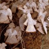 Ангелче от покълваща хартия