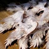 Ангелски крилца от покълваща хартия