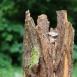 buy Декоративна кашпа от дървесна кора in Bazarino