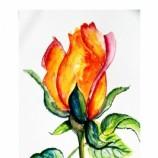 buy Роза in Bazarino