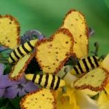 Пчелички за посаждане