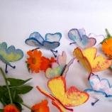Пеперуди за посаждане със семена Невен